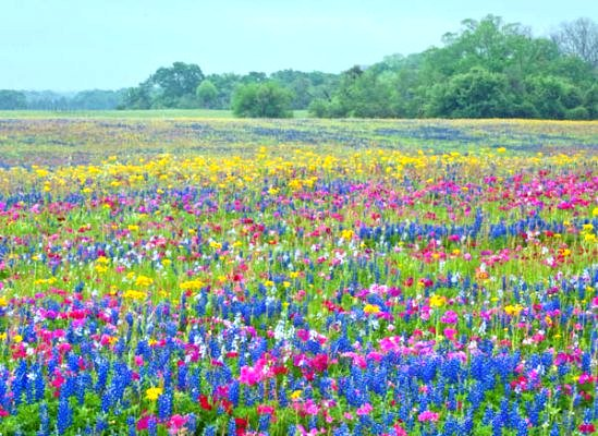 Bulk wildflower seeds buy wild flower seed online all perennial wildflower seeds mightylinksfo