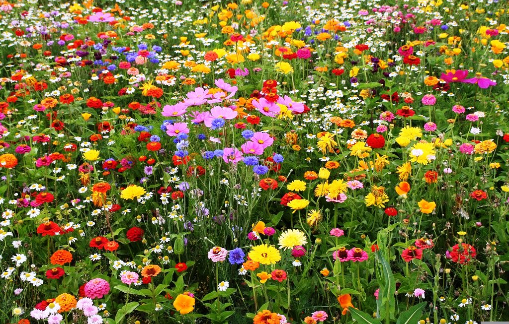 Most Popular Wildflower Mixes