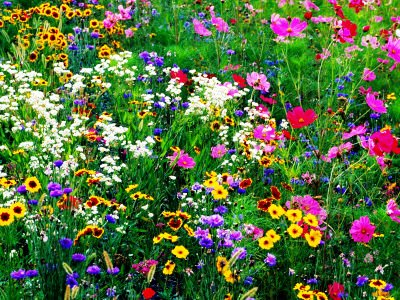 Regional Wildflower Seeds