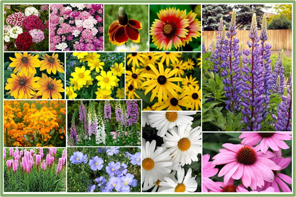 Bulk All Perennial Wildflower Seed Mix