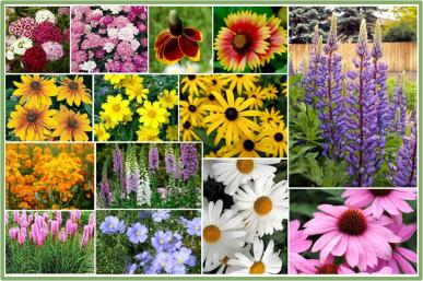 Bulk perennial wildflower seeds buy perennial wild flower seed mix bulk all perennial wildflower seed mix 25 pounds mightylinksfo