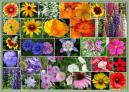 Western Wildflower Seed Mix