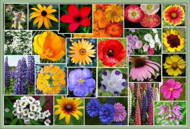 Southeast Wildflower Seed Mix- 50 Pounds