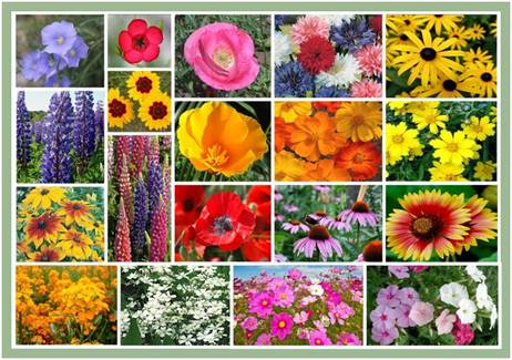 Bulk Burst Of Bloom Annual & Perennial Wildflower Seed Mix