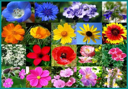 Bulk All Annual Wildflower Seed Mix- 25 Pounds