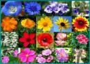 All Annual Wildflower Seed Mix