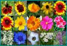 Bird & Butterfly Wildflower Seed Mix