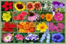 Regional Wildflower Seed Mixes
